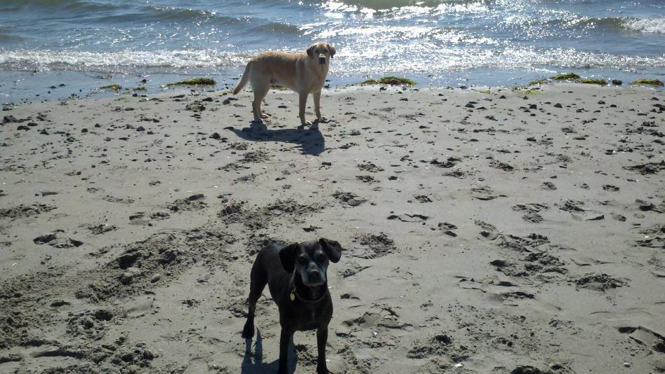 Dog Beach Nahant